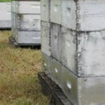 Пчёлы и опыление
