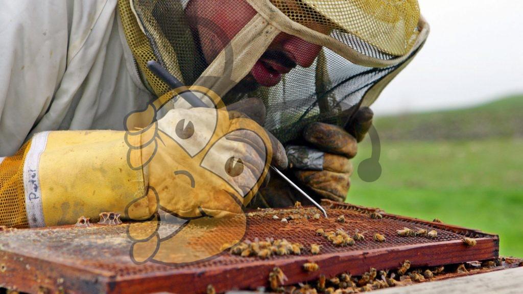 Инсектицид убивает способность королевы пчел к яйцекладки