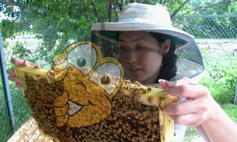 Популярный класс инсектицидов никотина на основе имеют существенное влияние на пчелиных колоний.