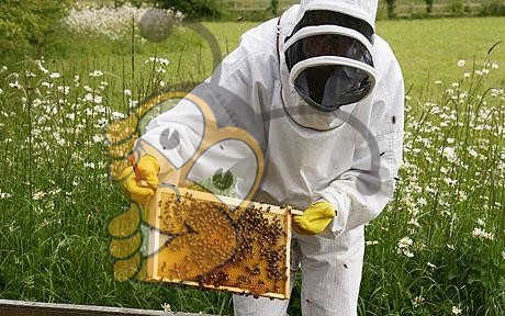 Секрет свободного лечения пчеловодстве