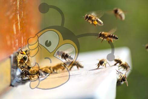 Взаимодействие между клещами Варроа и имидаклоприд снижает способность полета пчел