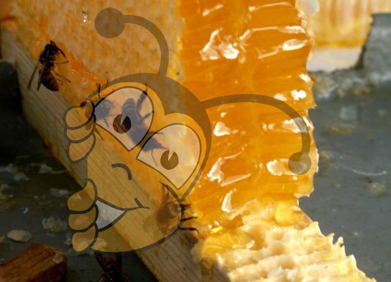 Захватив естественную сладость меда в летний период